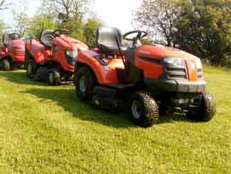 uncut lawn grass